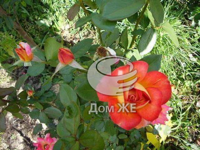 http://www.domge.ru/big_foto_1327449289_5